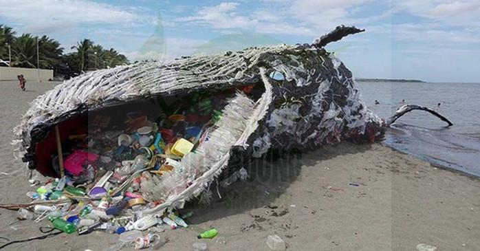 Hậu quả ô nhiễm môi trường biển